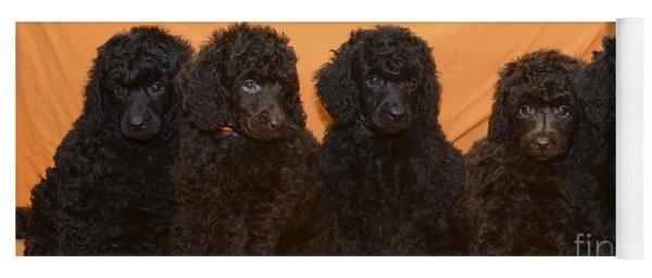 Five Poodle Puppies  Yoga Mat
