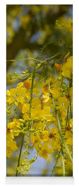 Flowers Of Palo Verde Tree, Big Bend Yoga Mat
