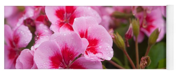 Flowers On A Rainy Sunday Afternoon Yoga Mat