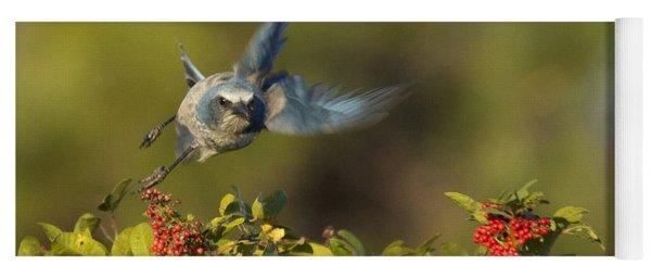 Flying Florida Scrub Jay Photo Yoga Mat