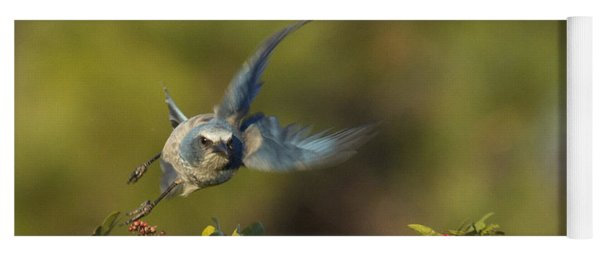 Flying Florida Scrub Jay Photo Yoga Mat