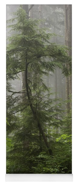 Foggy Woods Yoga Mat
