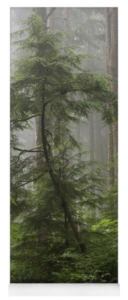 Foggy Woods Yoga Mat