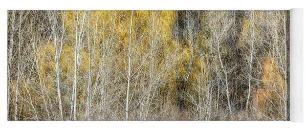 Forest In Late Fall At Scarborough Bluffs Yoga Mat