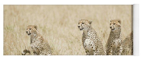 Four Cheetah Cubs Acinonyx Jubatus Yoga Mat