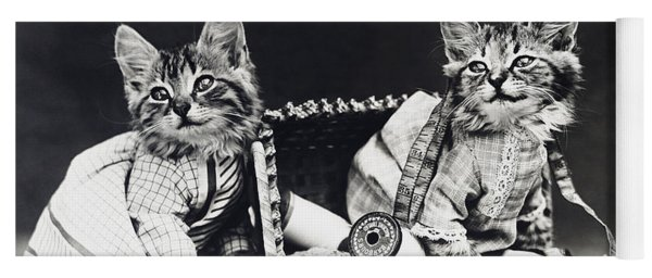 Frees Kittens, C1915 Yoga Mat
