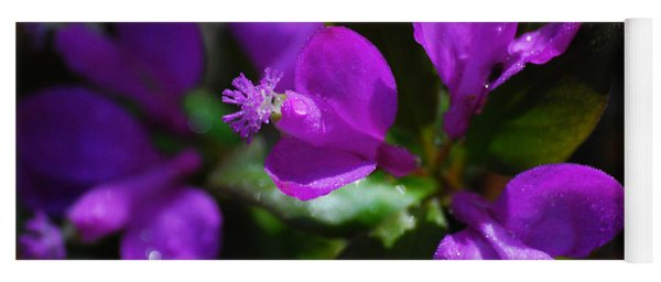 Yoga Mat featuring the photograph Fringed Polygala by Christina Rollo