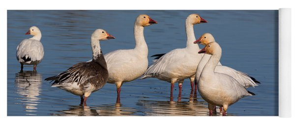 Gaggle Of Snow Geese Reflected Yoga Mat