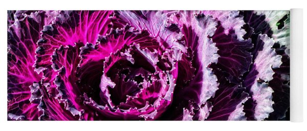 Garden Haze - Purple Kale Art By Sharon Cummings Yoga Mat