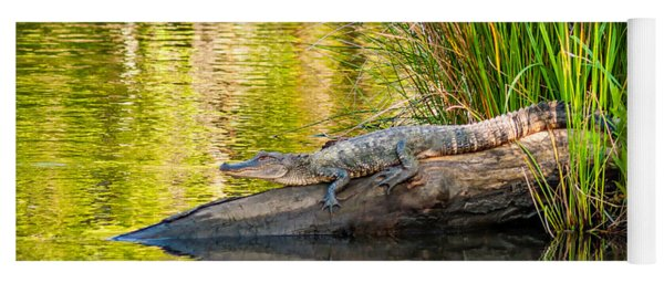Gator 3 Yoga Mat