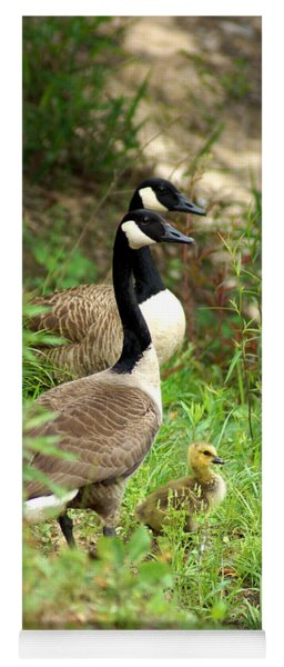 Geese And Gosling Yoga Mat