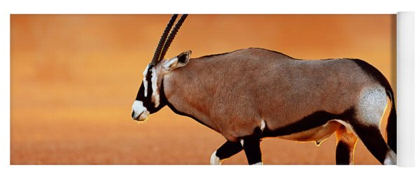 Gemsbok On Desert Plains At Sunset Yoga Mat