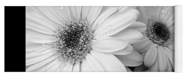 Gerber Daisies In Black And White Yoga Mat