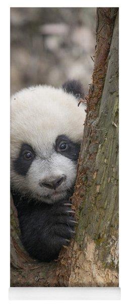 Giant Panda Cub Bifengxia Panda Base Yoga Mat