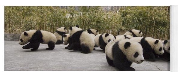 Giant Panda Cubs Wolong China Yoga Mat