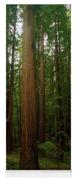Giant Redwood Trees Ave Of The Giants Yoga Mat