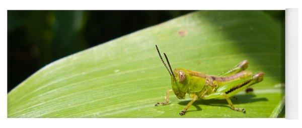 Grasshopper On Corn Leaf   Yoga Mat