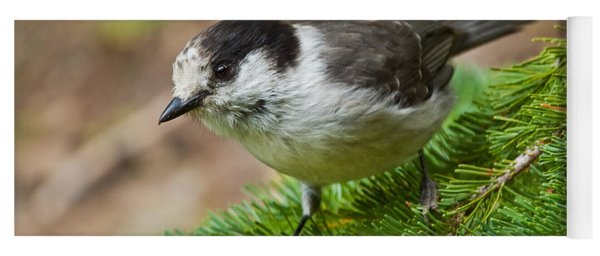 Gray Jay On Fir Tree Yoga Mat