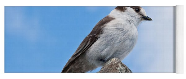 Gray Jay With Blue Sky Background Yoga Mat