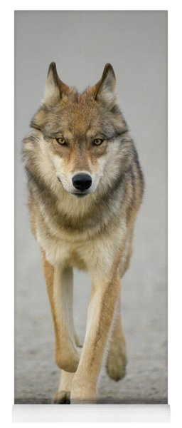 Gray Wolf Denali National Park Alaska Yoga Mat