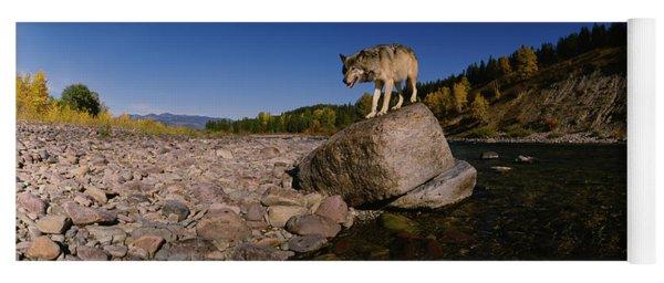 Gray Wolf Standing On A Rock Yoga Mat