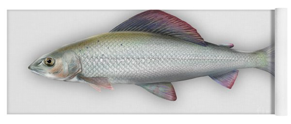 Grayling - Thymallus Thymallus - Ombre Commun - Harjus - Flyfishing - Trout Waters - Trout Creek Yoga Mat