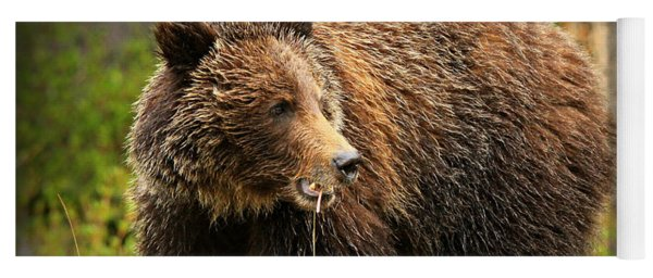 Grazing Grizzly Yoga Mat