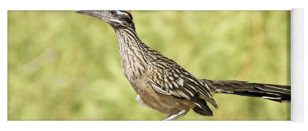 Greater Roadrunner Looking Out Yoga Mat