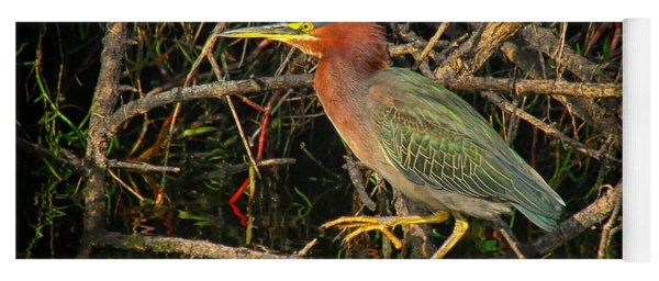 Green Heron Basking In Sunlight Yoga Mat
