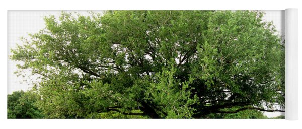 Green Tree Yoga Mat
