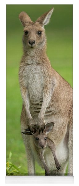 Grey Kangaroo And Joey  Yoga Mat