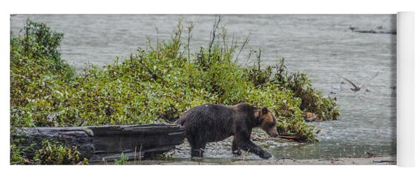 Grizzly Bear Late September 4 Yoga Mat