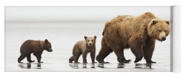 Grizzly Bear Mother And Cubs Lake Clark Yoga Mat