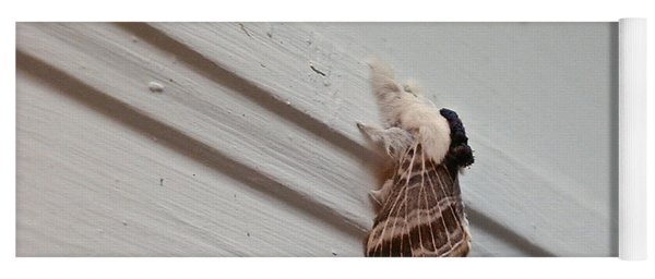 Hairy Russian Moth Yoga Mat