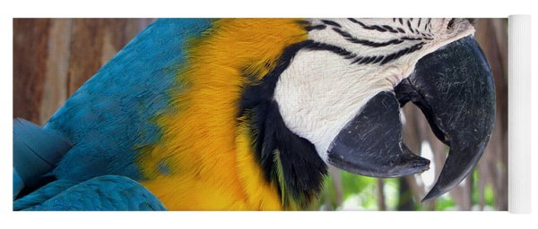Harvey The Parrot 2 Yoga Mat