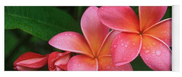 He Pua Laha Ole Hau Oli Hau Oli Oli Pua Melia Hae Maui Hawaii Tropical Plumeria Yoga Mat