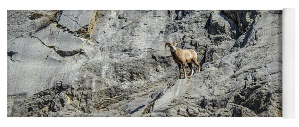 Big Horn Sheep Coming Down The Mountain  Yoga Mat