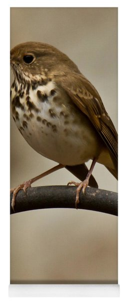 Yoga Mat featuring the photograph Hermit Thrush by Robert L Jackson