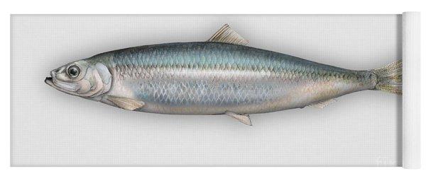 Herring  Clupea Harengus - Hareng - Arenque - Silakka - Aringa - Seafood Art Yoga Mat