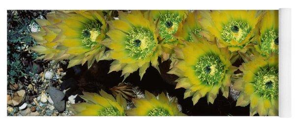 High Angle View Of Cactus Flowers, Big Yoga Mat