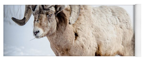 Big Horns On This Big Horn Sheep Yoga Mat