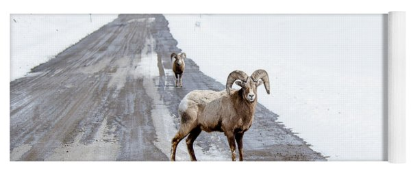 On The Road Again Big Horn Sheep  Yoga Mat
