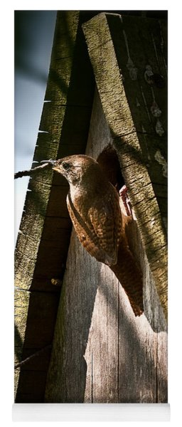 House Wren At Nest Box Yoga Mat