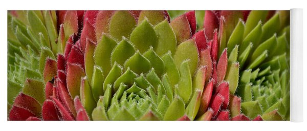 Houseleeks Aka Sempervivum From The Side Yoga Mat