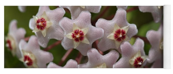 Hoya Waxflower Yoga Mat