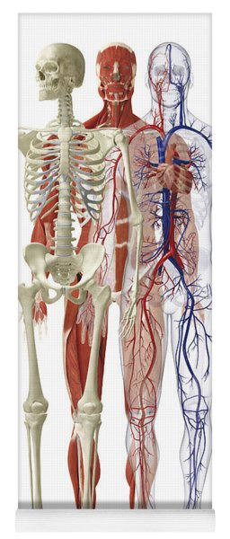 Human Body Systems, Illustration Yoga Mat