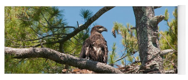 Immature Bald Eagle Yoga Mat