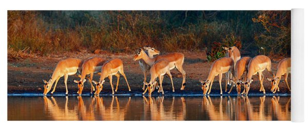 Impala Herd With Reflections In Water Yoga Mat