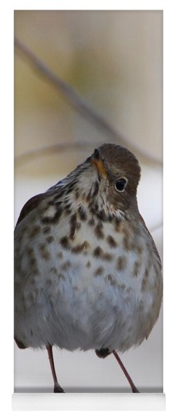 Yoga Mat featuring the photograph Inquisitive Hermit Thrush by Cascade Colors