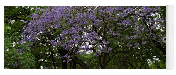 Jacaranda In The Park Yoga Mat